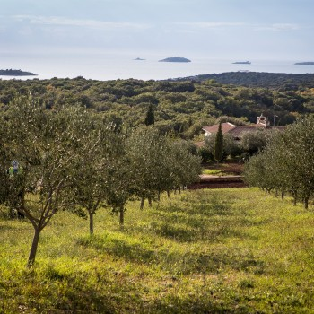 Olive oils and Olive oils roads