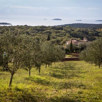 Olivenölstraßen
