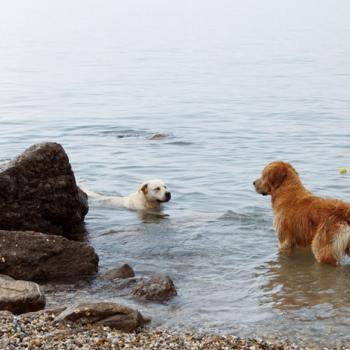 Plaže za pse