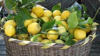 Besplatna zelena radionica: Agrumi - zimski izvori vitamina