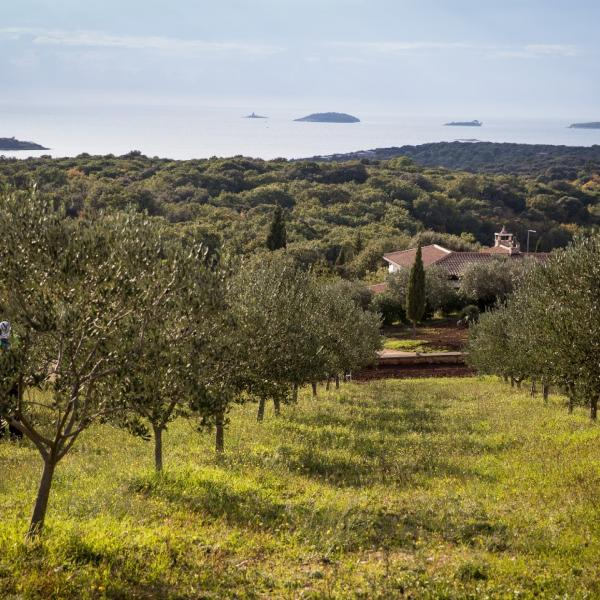Prestigious guide Flos Olei awarded numerous Istrian olive growers